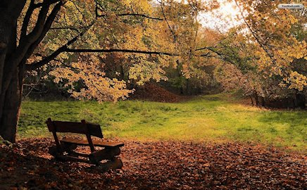 bench in peaceful wood